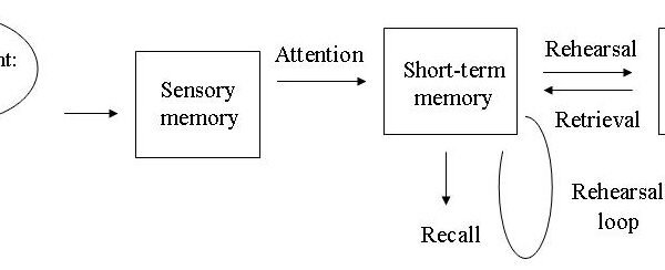 Memory Models in Psychology - understanding human memory