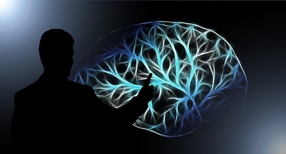 Where is memory stored in the brain