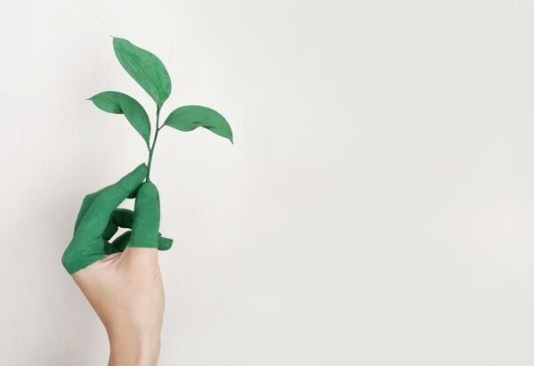 Pro-Environmental Behavior: Herd Mentality Motivates, Money Does Not