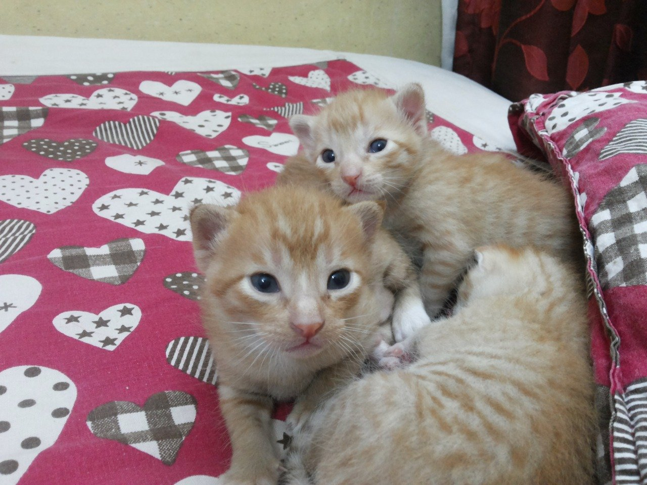 Cats looking at you to induce the Kawaii effect