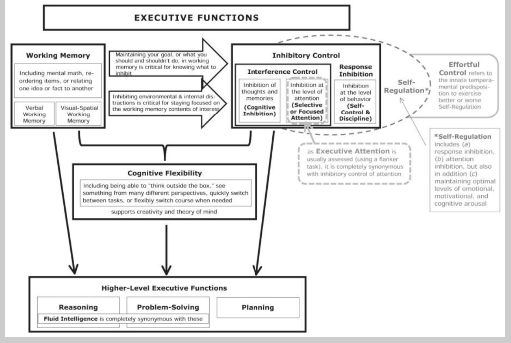 model of executive functions by Adele Diamond