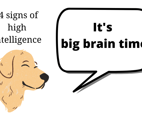 14 Signs of High Intelligence. Do you show these?